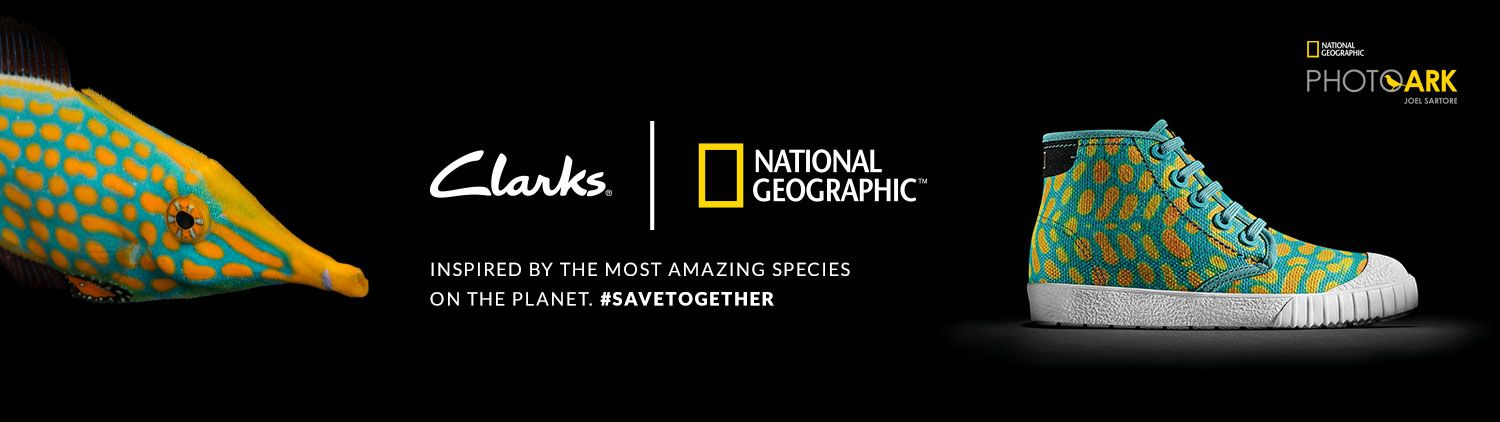 Clarks   National Geographic - Inspired by the most amazing species on the planet #savetogether