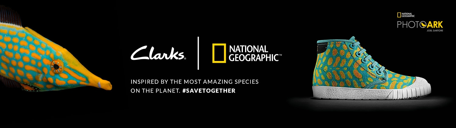 Clarks | National Geographic - Inspired by the most amazing species on the planet #savetogether