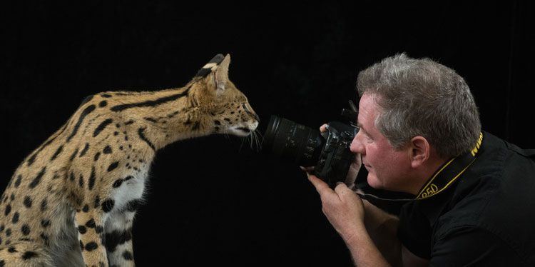Joel Sartore taking a photo of an endangered cat