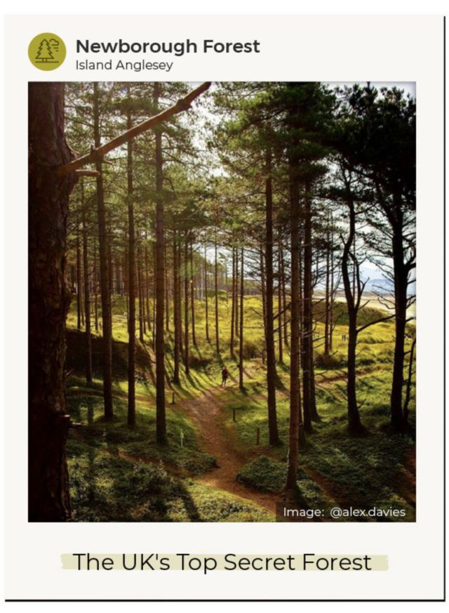 An Instagram image of Newborough Forest on Anglesey Island